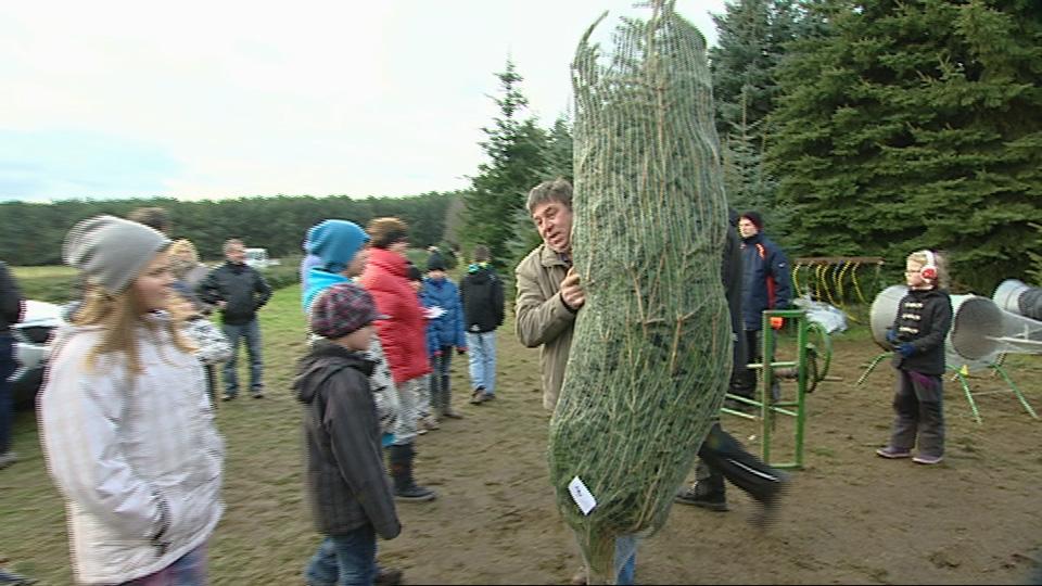 Tannenbaum kaufen berlin friedrichshain